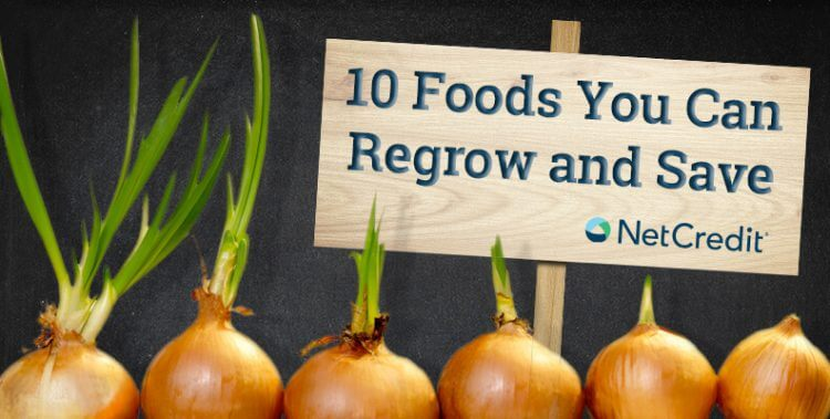 10 Foods You Can Regrow and Save