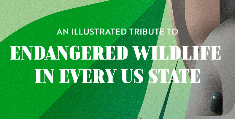 An Illustrated Tribute to the Most Endangered Wildlife in Every US State