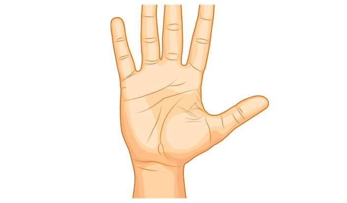 Hand Test - Protein