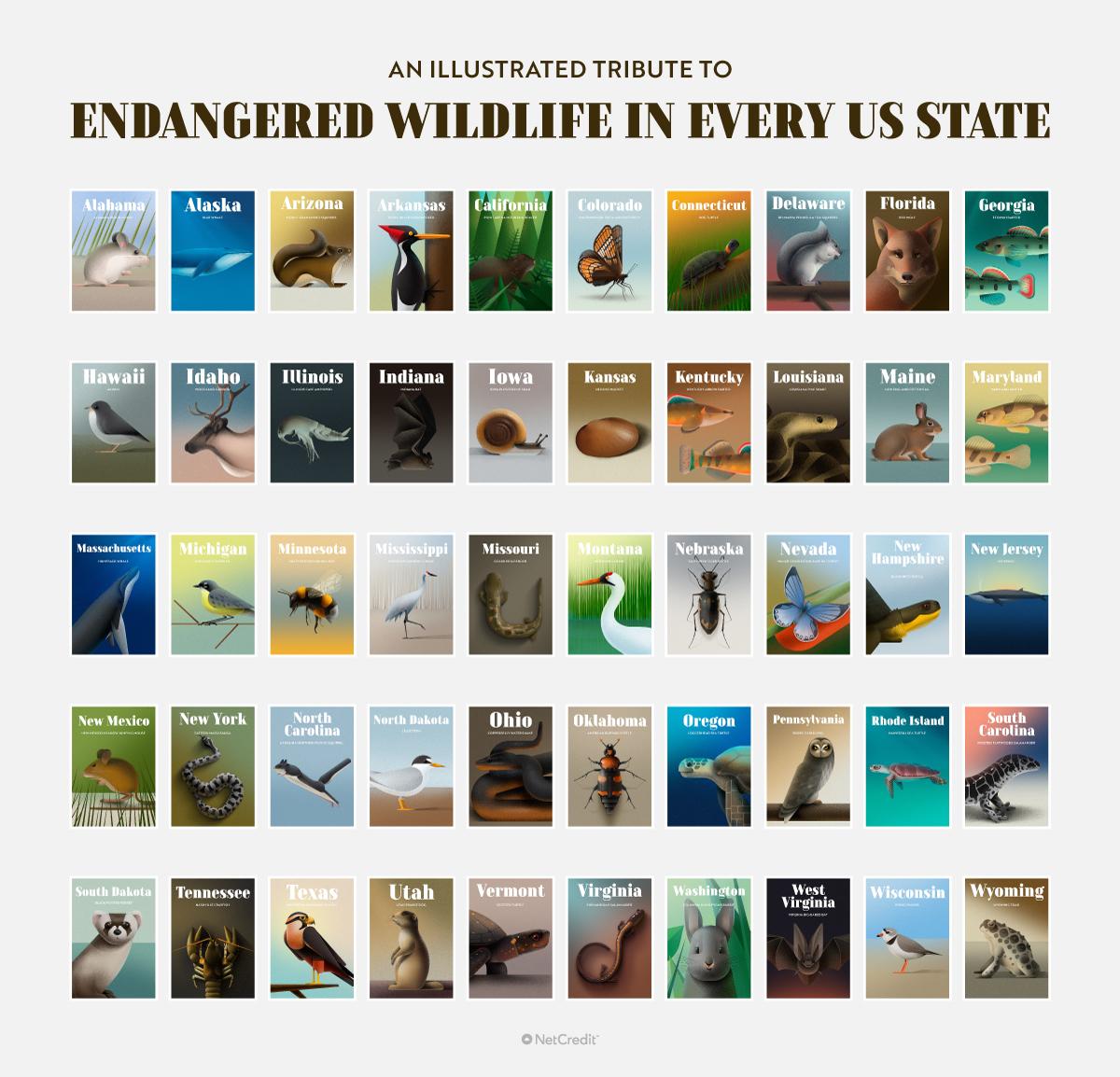 endangered wildlife USA