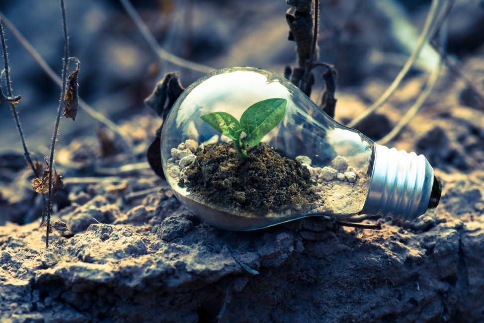 Lightbulb filled with dirt and small green sprout