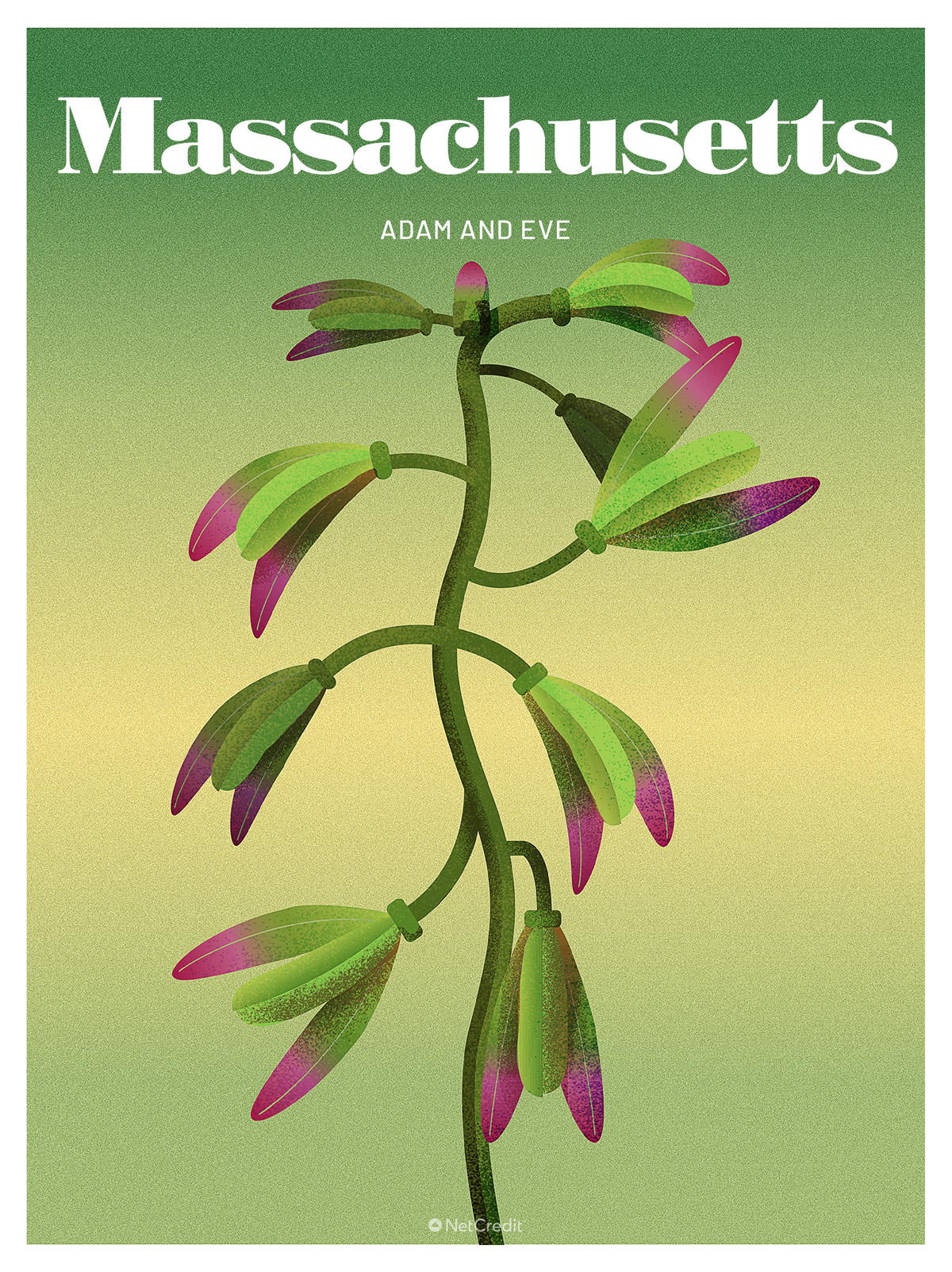 Endangered Plant in Massachusetts: Adam and Eve