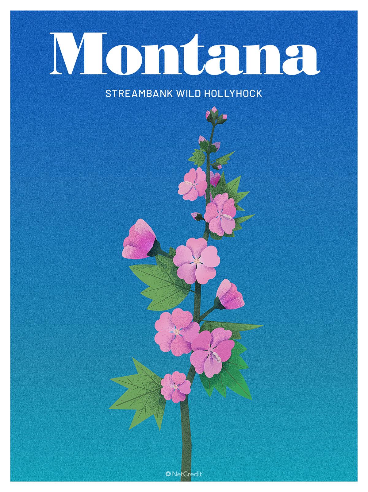 Endangered Plant in Montana: Streambank Wild Hollyhock