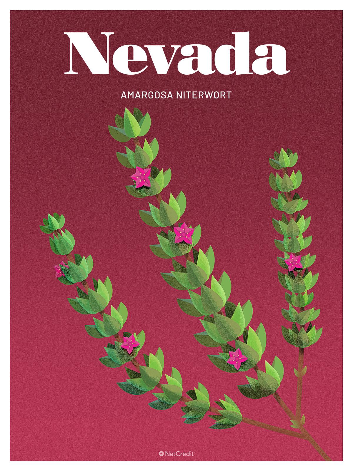 Endangered Plant in Nevada: Amargosa Niterwort
