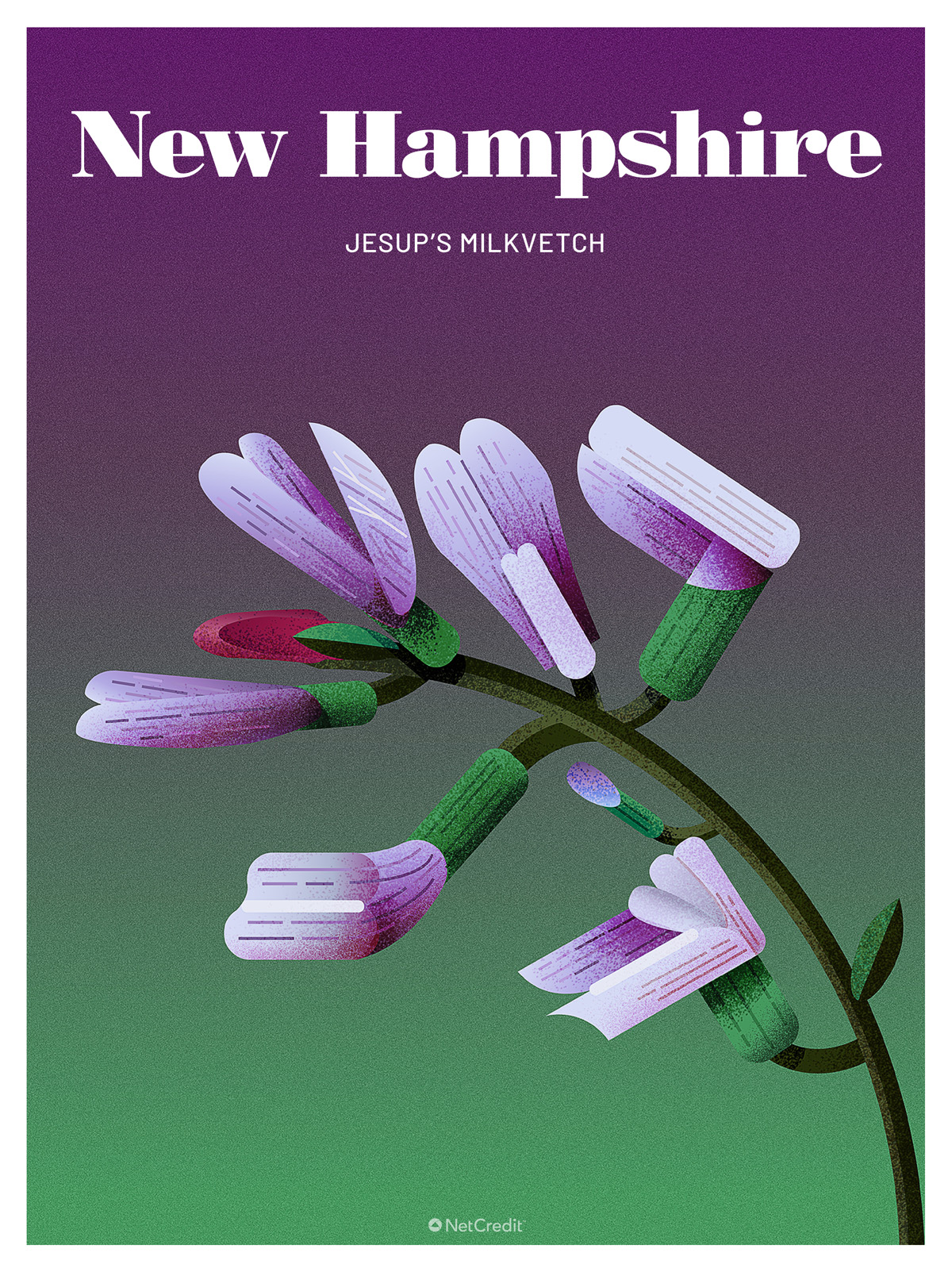 Endangered Plant in New Hampshire: Jessup's Milkvetch