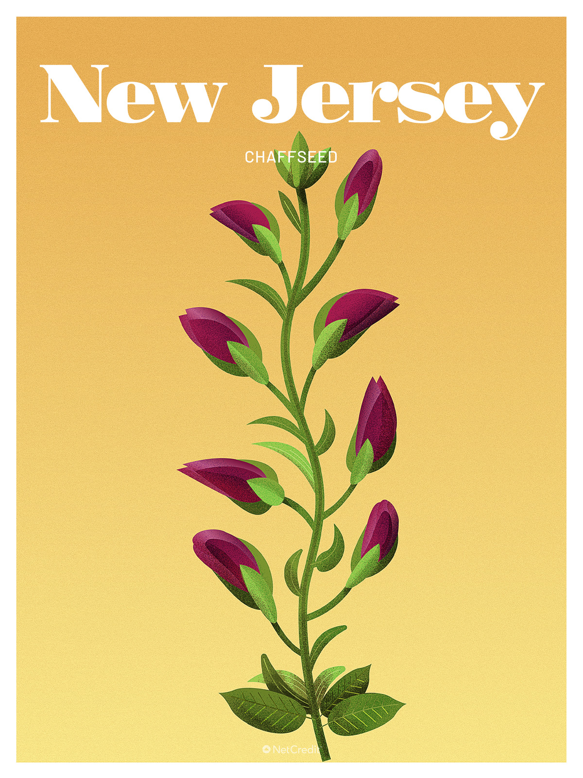 Endangered Plant in New Jersey: Chaffseed