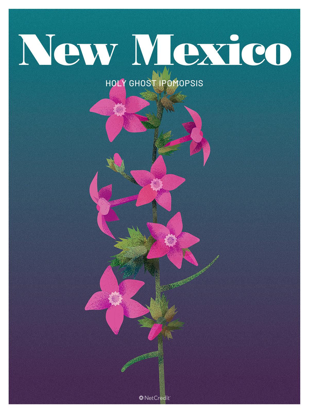 Endangered Plant in New Mexico: Holy Ghost Ipomopsis