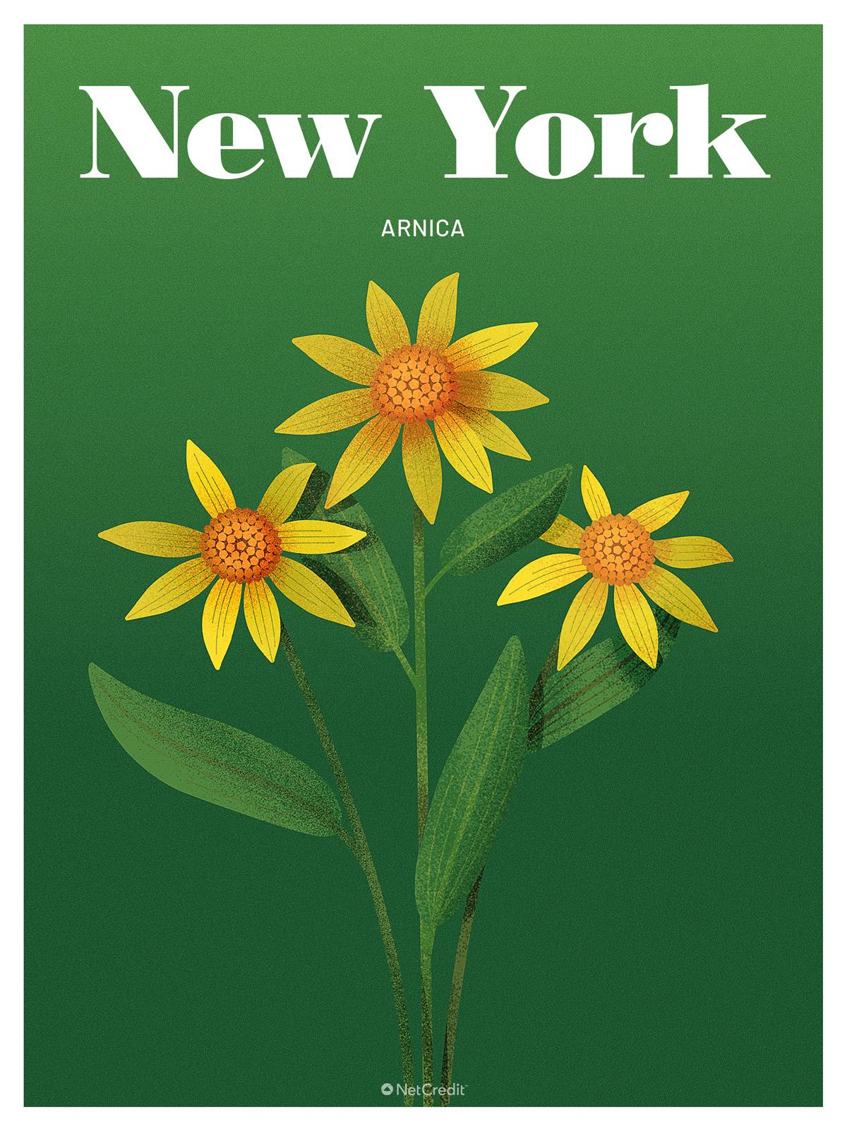 New York: Arnica