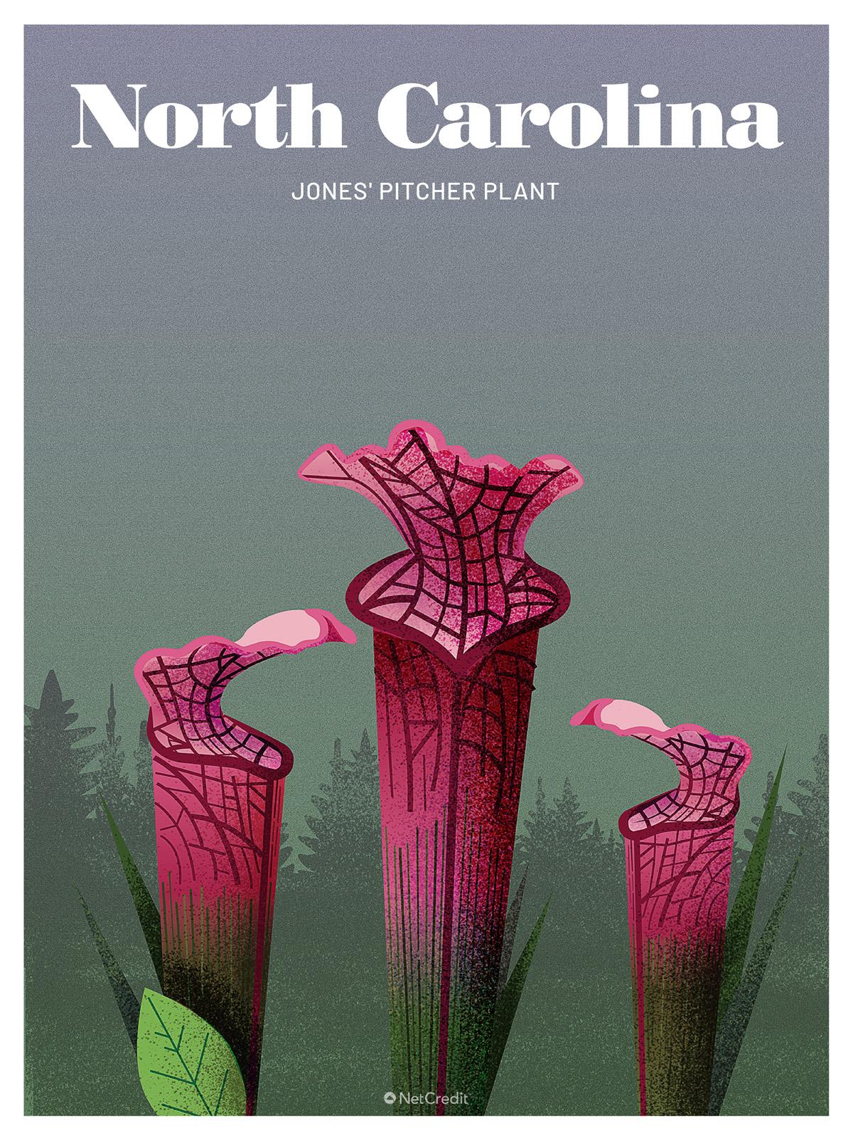 North Carolina: Pitcher Plant