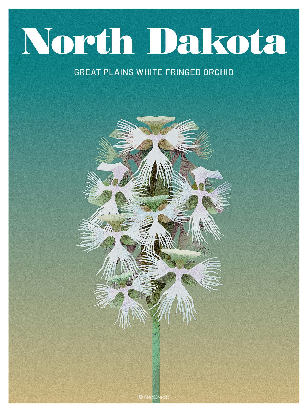 Endangered Plant in North Dakota: Great Plains White Fringed Orchid