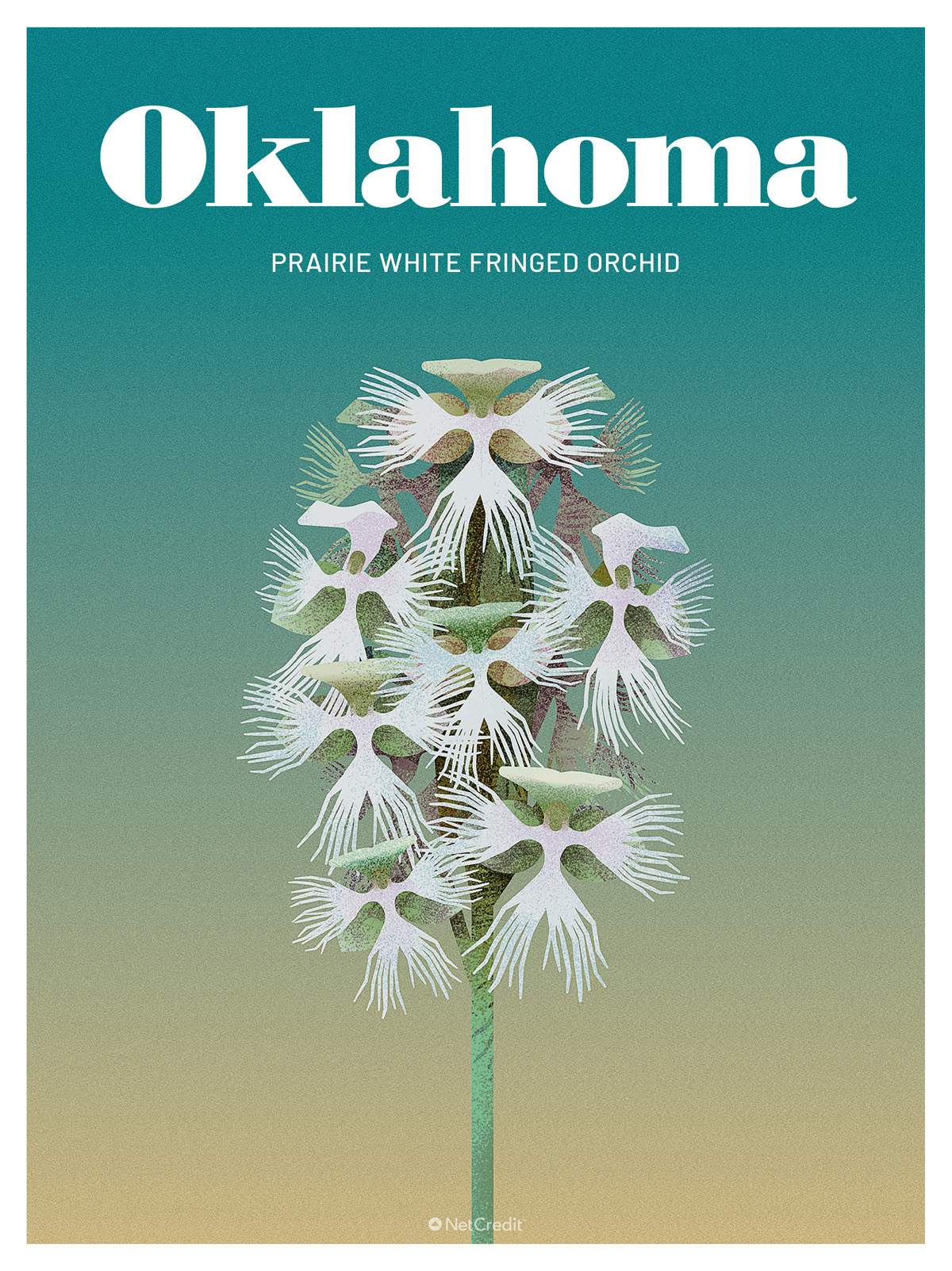 Endangered Plant in Oklahoma: White Fringed Orchid