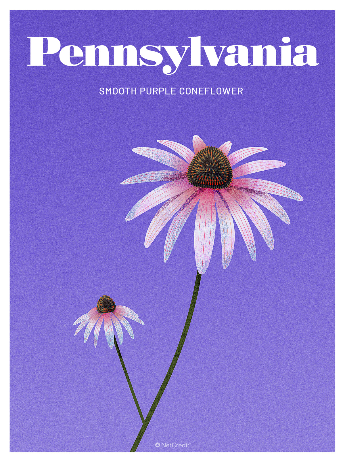 Endangered Plant in Pennsylvania: Smooth Purple Coneflower