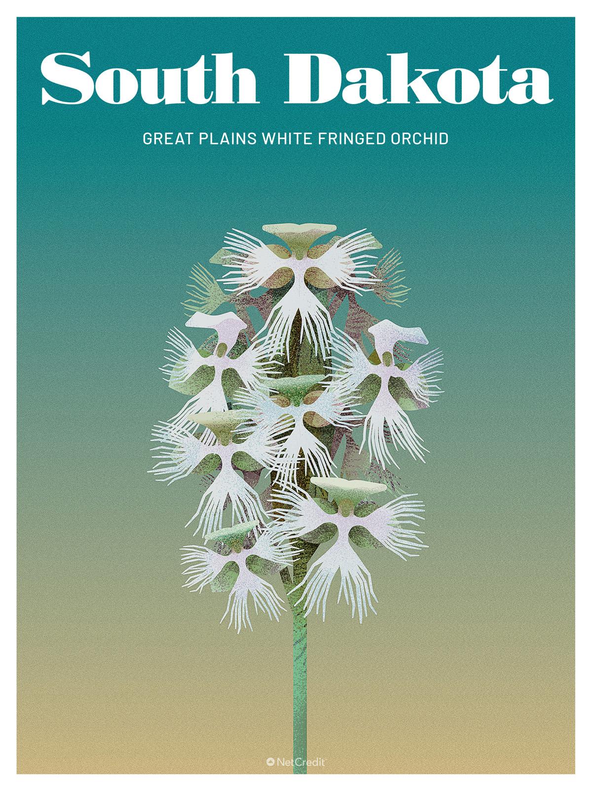 Endangered Plant in South Dakota: White Fringed Orchid