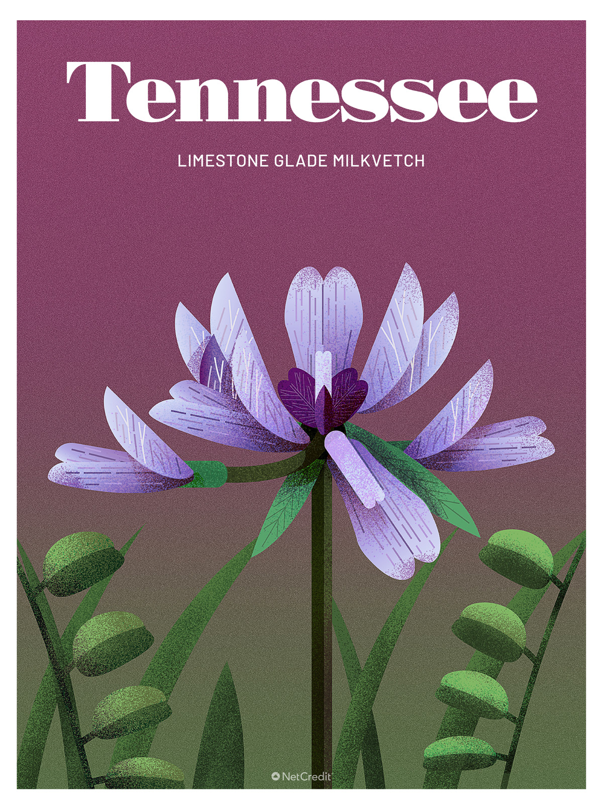 Endangered Plant in Tennessee: Limestone Glad Milkvetch