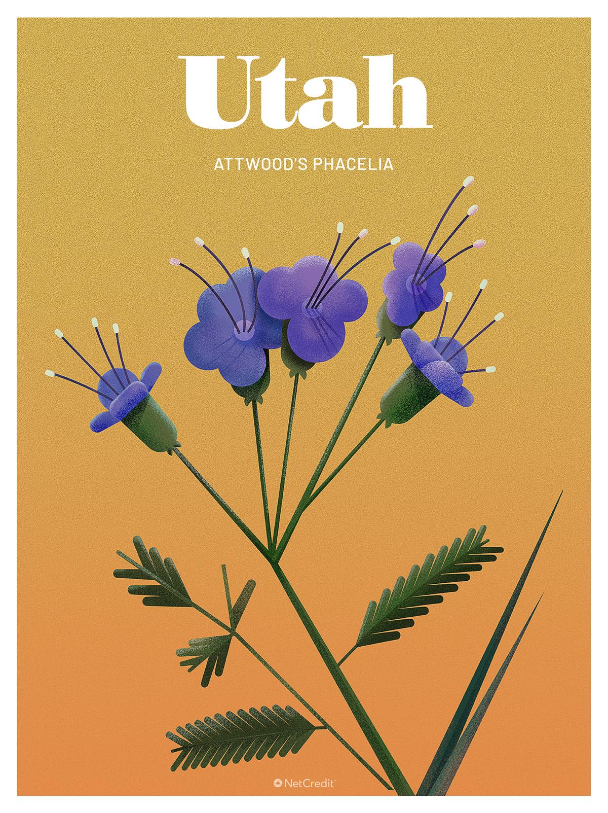 Endangered Plant in Utah: Utahphacelia