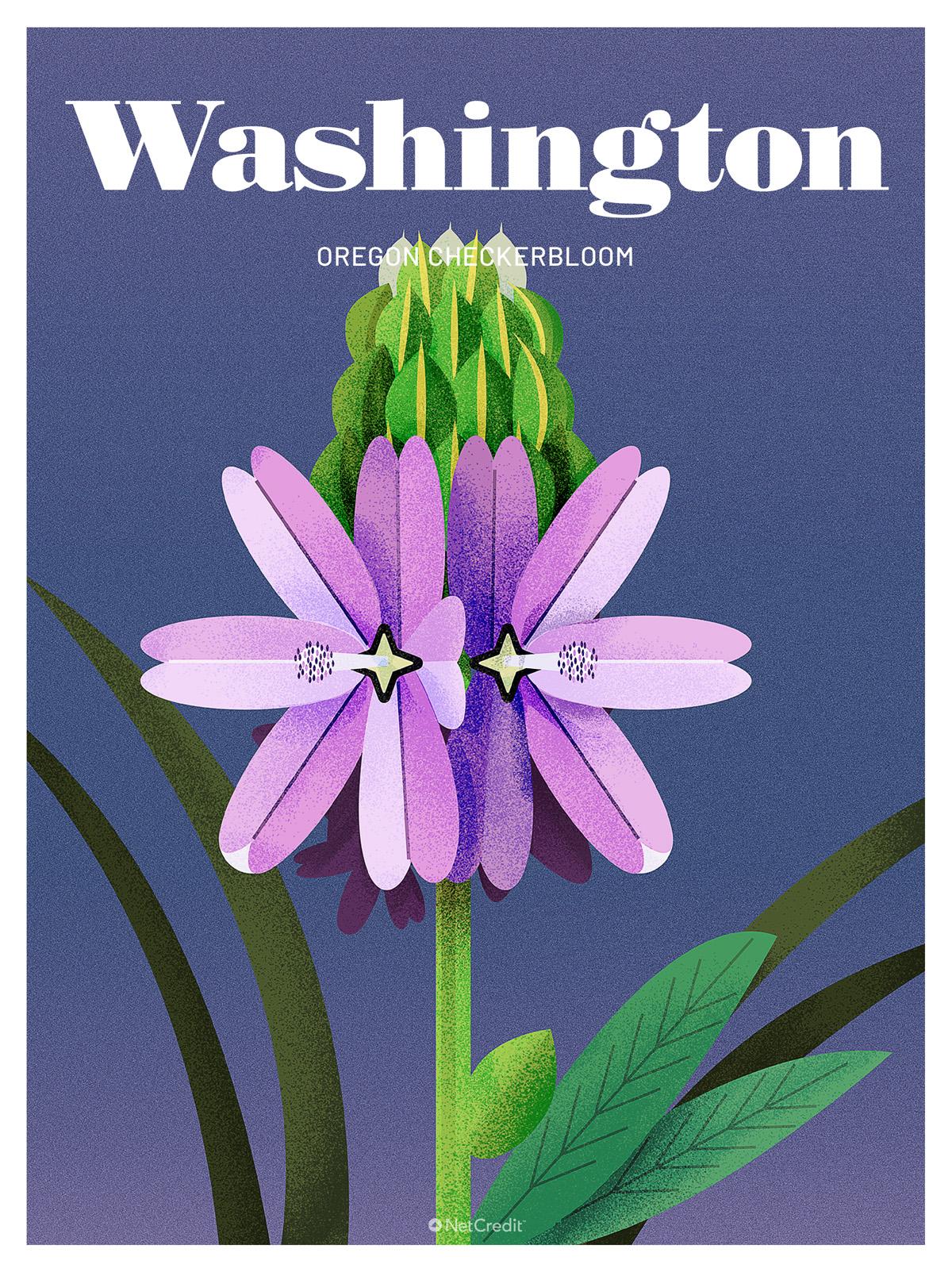 Endangered Plant in Washington: Oregon Checkerbloom