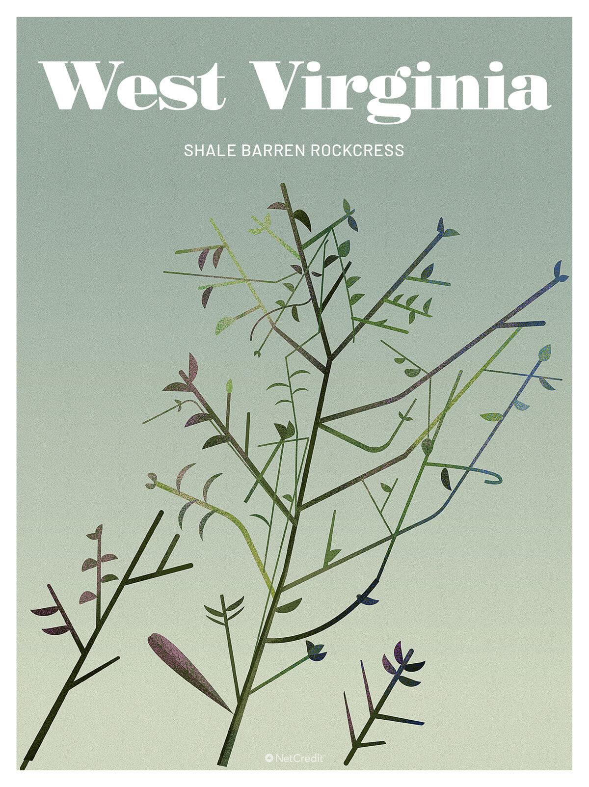 Endangered Plant in West Virginia: Shale Barren Rockcress