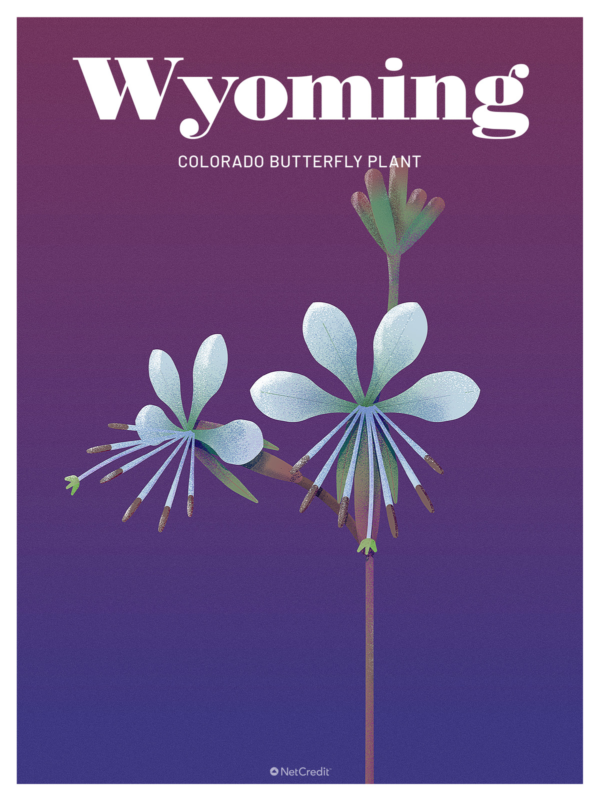 Endangered Plant in Wyoming: Colorado Butterfly Plant